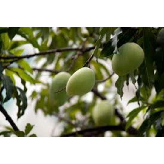 Amchoor, Amchur, szárított zöld mangó őrölve